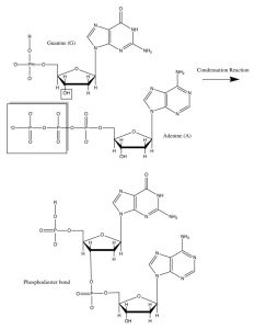 DNA condensation