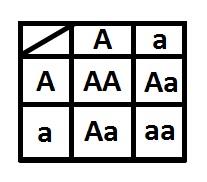 Make a Punnett Square