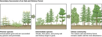 Secondary Succession Example